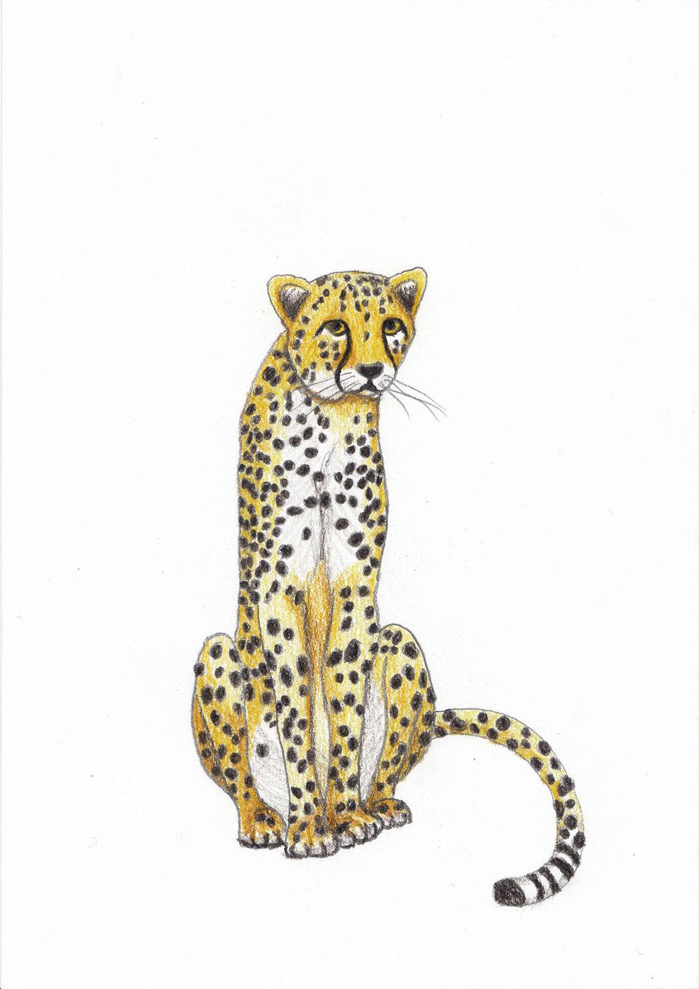 2018_Cheetah.jpg