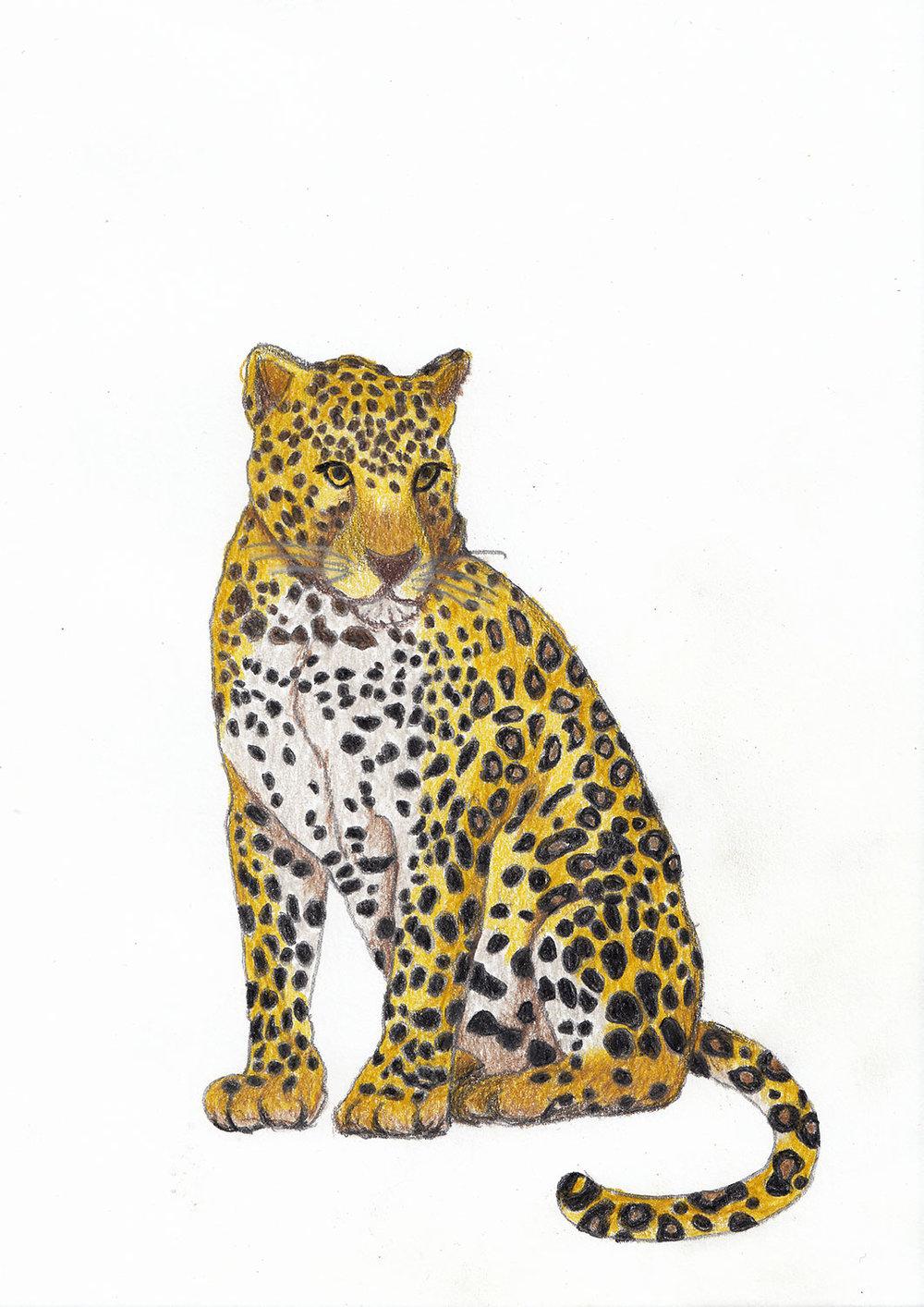 2018_Leopard.jpg