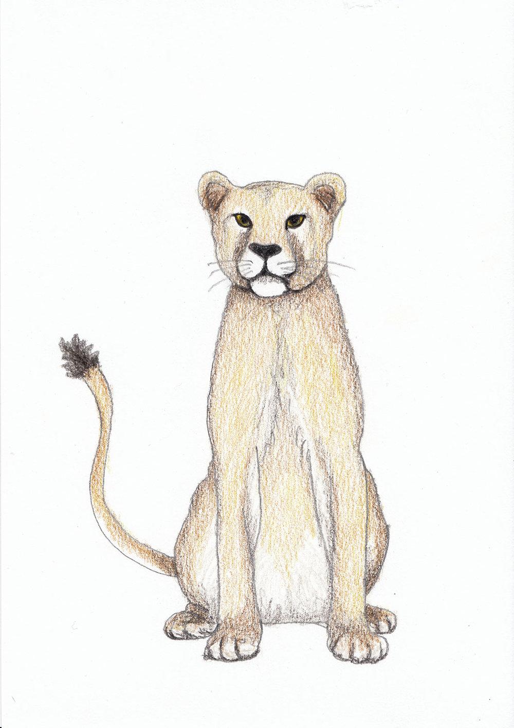 2018_Lioness.jpg