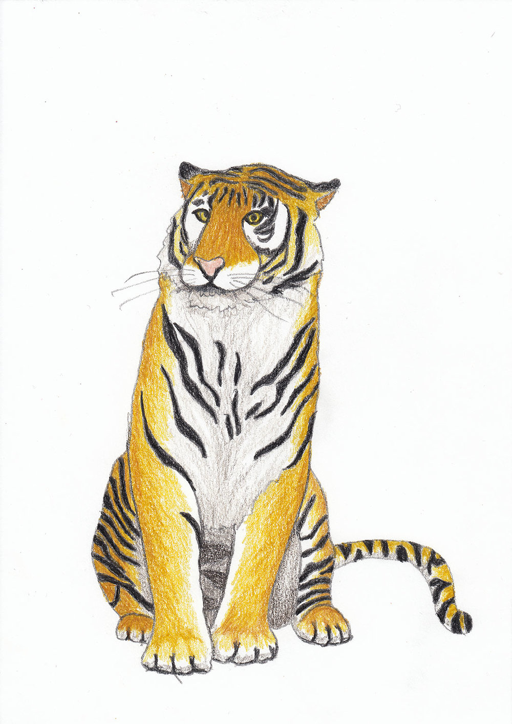2018_Tiger.jpg