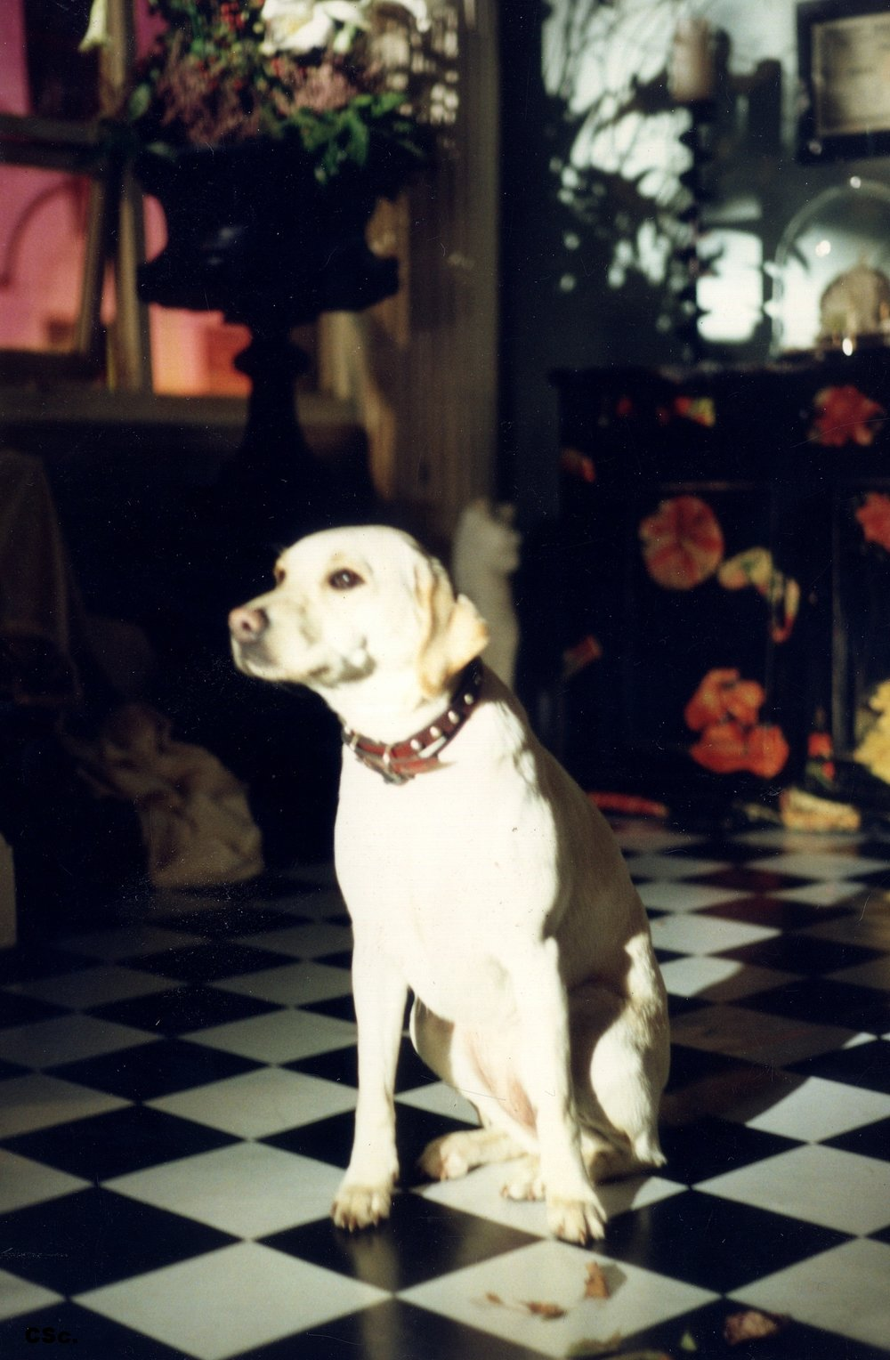 Primrose the Dog that Loved to Lunch at Flower Studio, 1990
