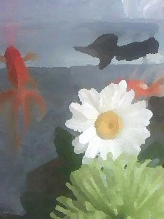 Fish and Flowers, 2013