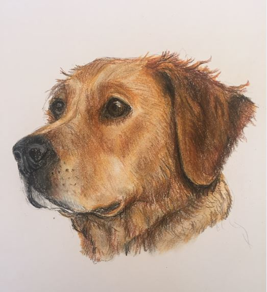 'Tulla' Pastel on paper