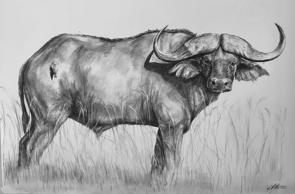 Stand Off Charcoal on paper 150cmX110cm £1950 SOLD