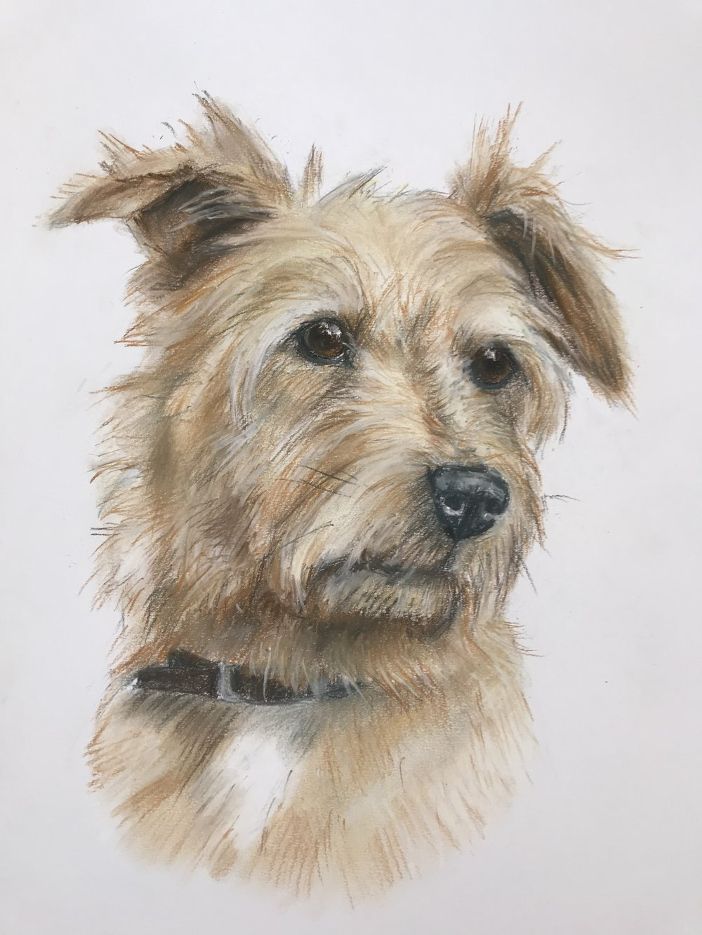 'Ted' Pastel on paper