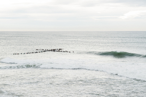 The cross paddle out adopted from CS Australia