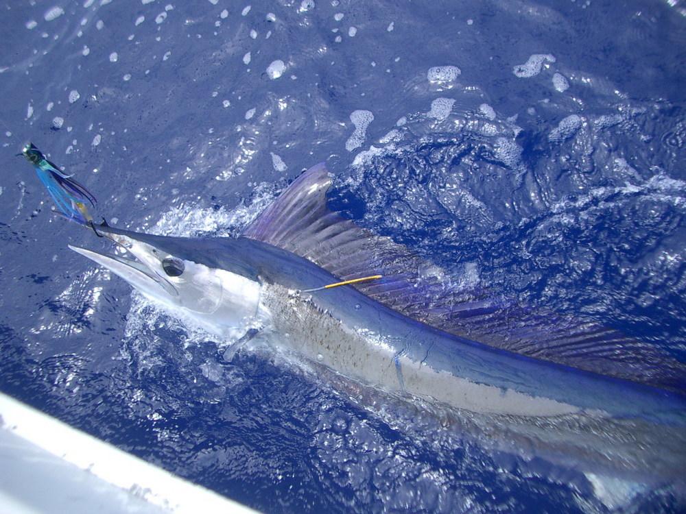 spearfish19.jpg