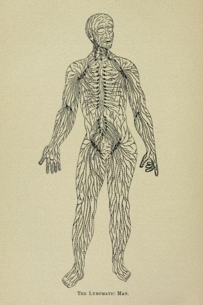 vintage_1920_lymphatic_system_anatomy_art_print-racb1dcaa5e6149d9bcf38ded5d8f4400_wv2_8byvr_700.jpg