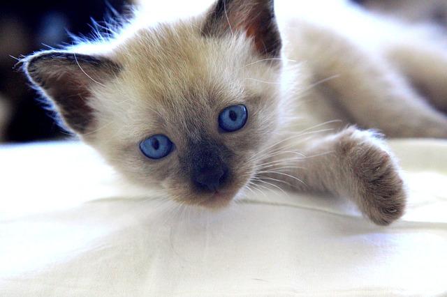 Also cute