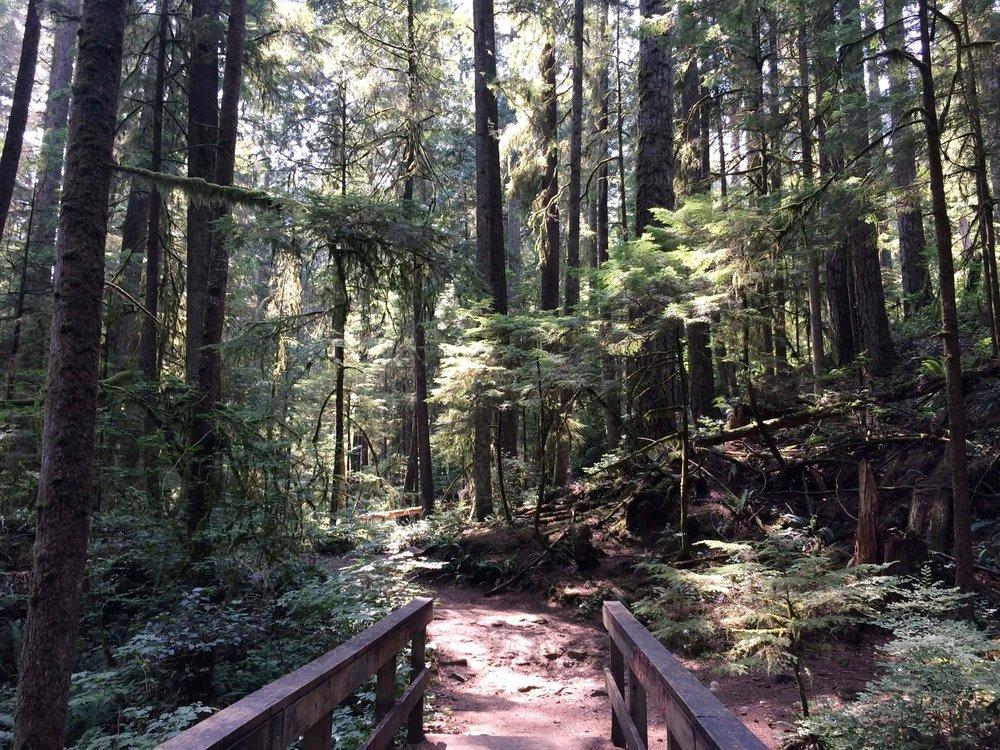 forest entry.jpg