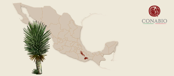 *Map taken from CONABIO website