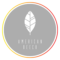 The-Loupe-Blog-Post-Photos_American-Beech.png