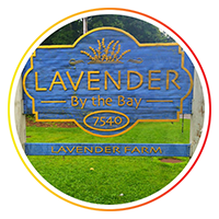 The-Loupe-Blog-Post-Photos_Lavender-by-the-Bay.png