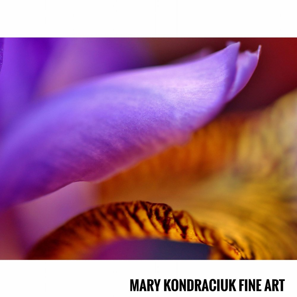 Mary Kondraciuk Fine Art