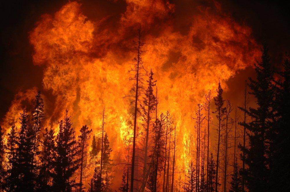 Fire-Forest.jpg