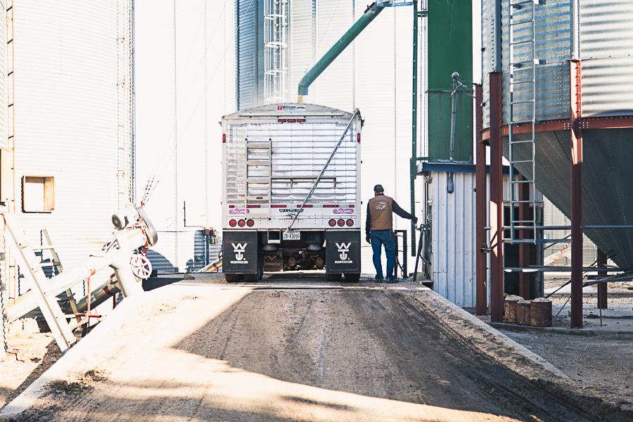 hauling corn2