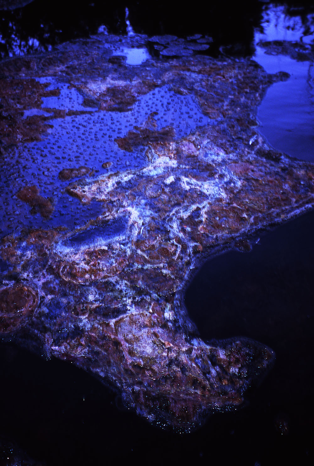 swamp texture.jpg