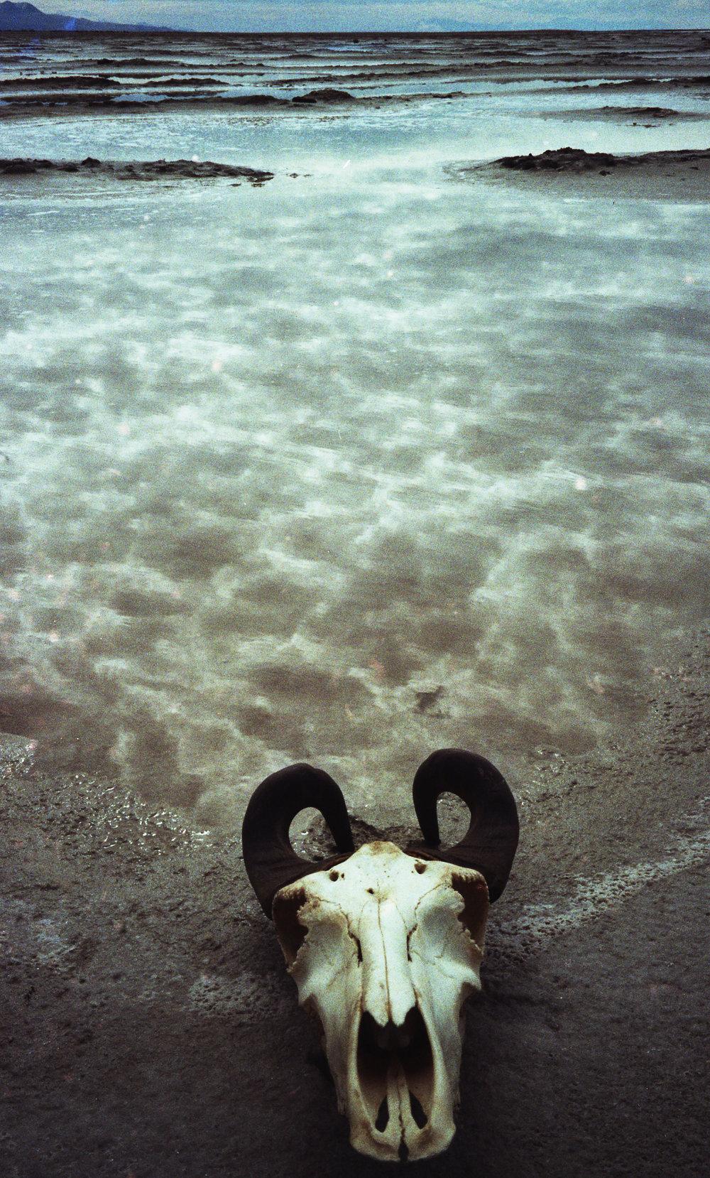 Skulls and Sand