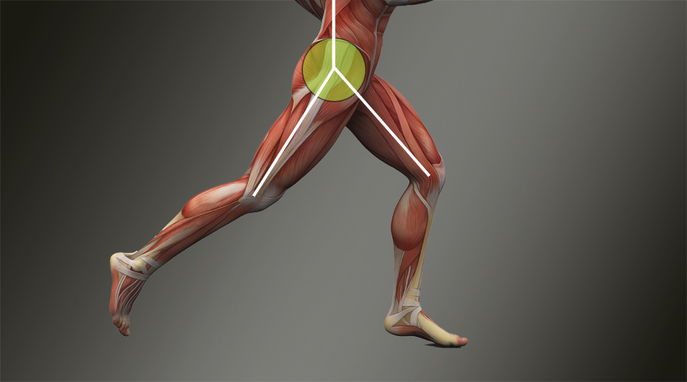 Hip Flexibility Is Speed North County Sports Medicine And Physical
