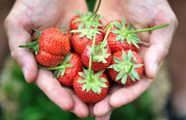Anti-Inflammatory-Berries_2.jpg