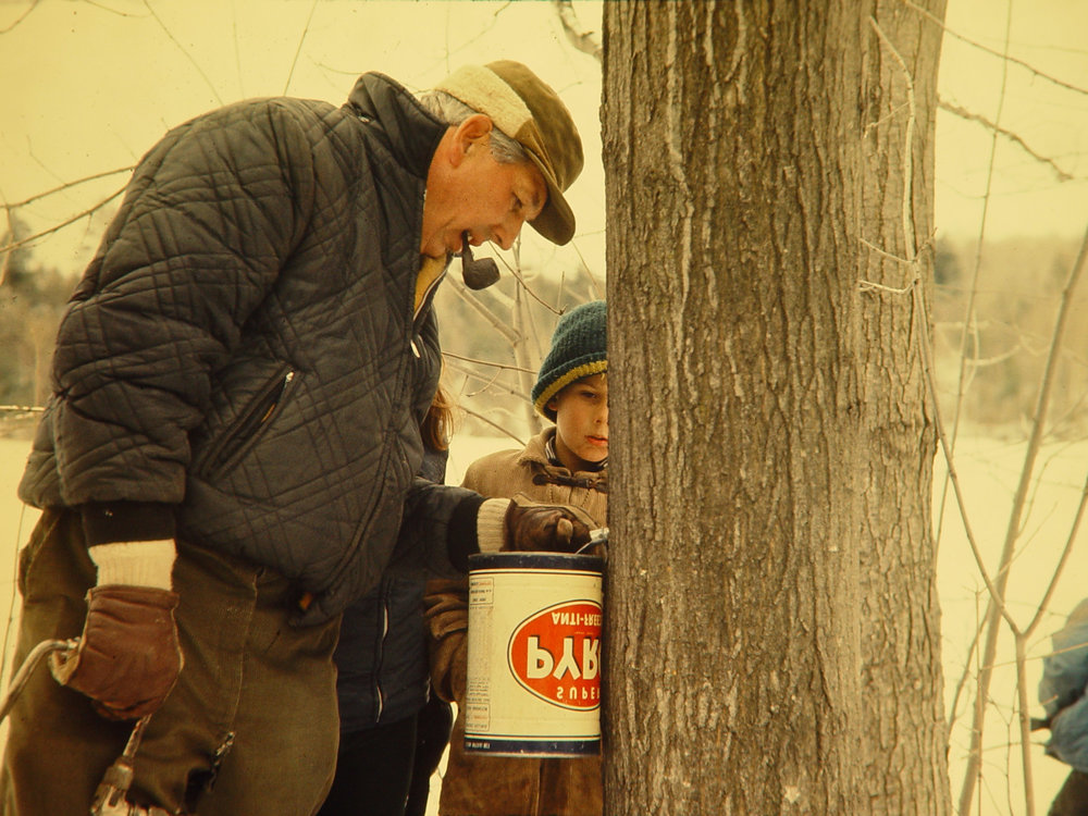 saint-armand-quebec-maple-syrup-tapping-1960s.jpg