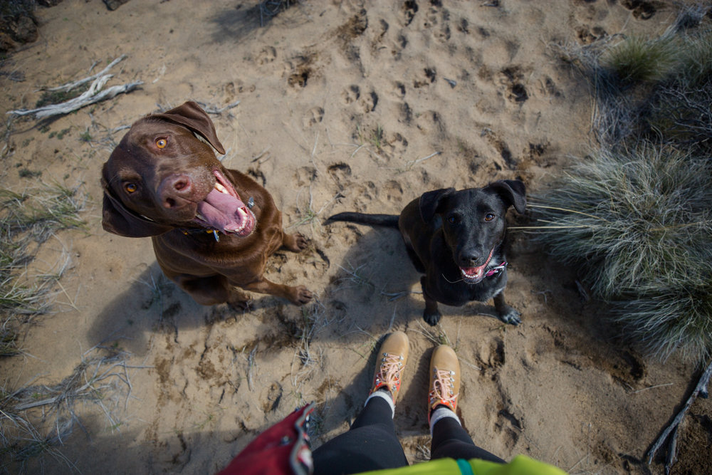 Patch-Sand-Pups.jpg