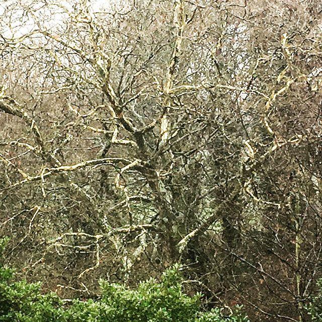 Burst #tree #nature #liverpool #iphonese