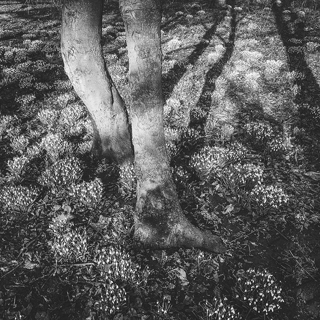Dryad Loci #iphonexrphotography #nature #shadow #spiritualbeings
