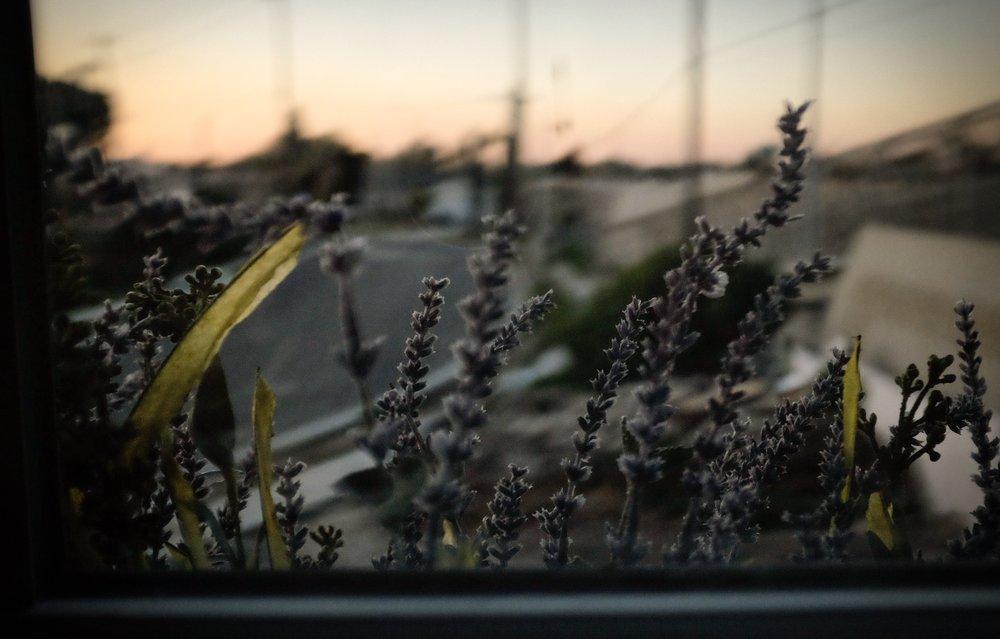 lavender window photograph photographer California