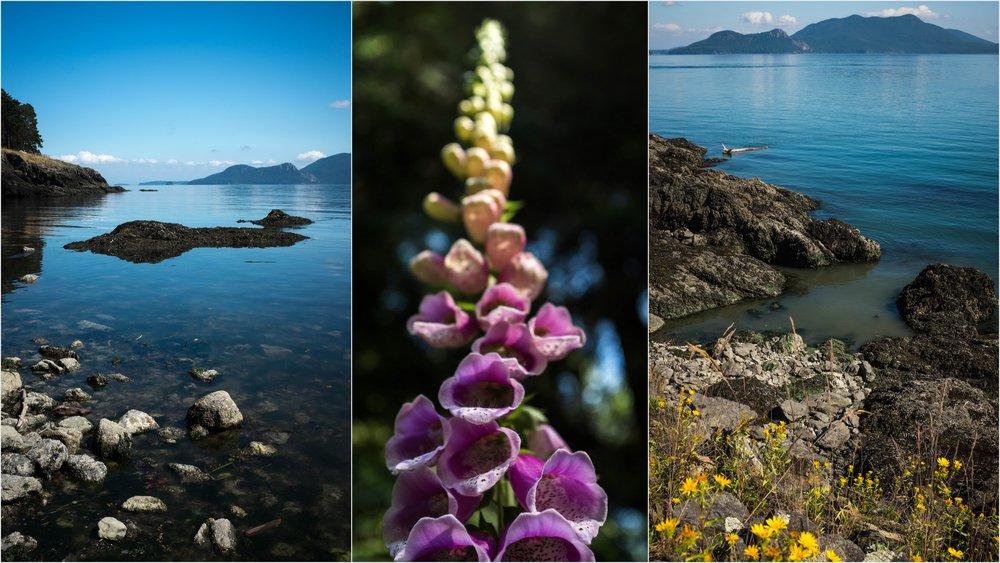 Orcas Island Nature Bliss4.jpg
