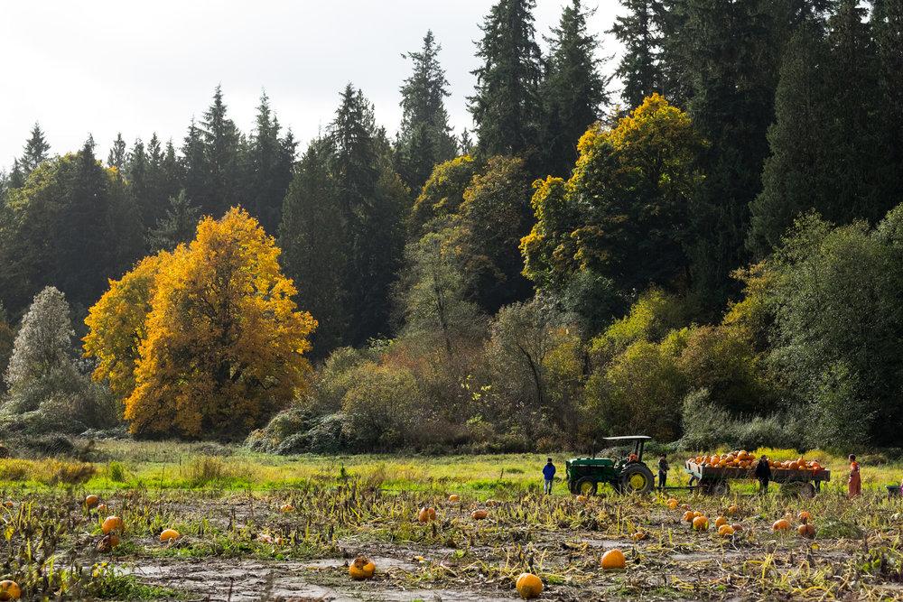 bobs corn maze leannabre photography Seattle farm