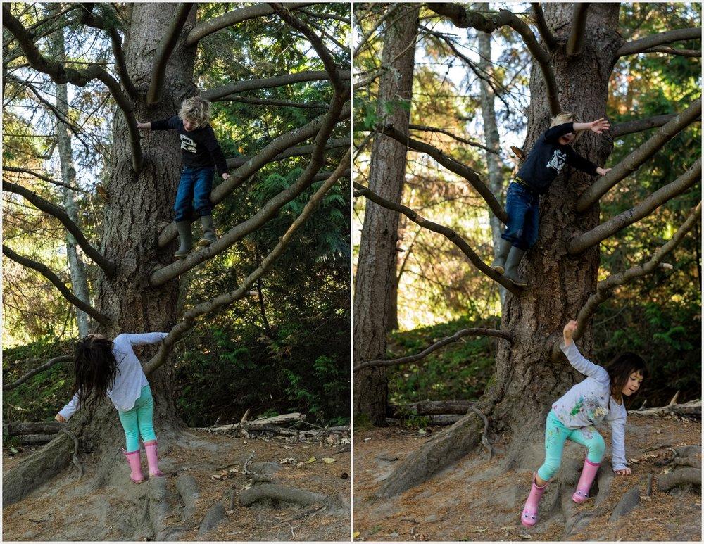 Tree Climbing2.jpg