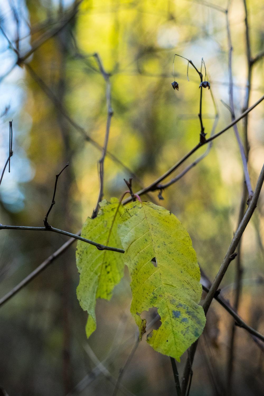 leaf Seattle port orchard nature tree