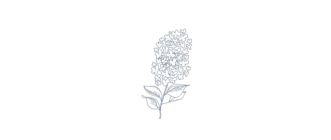 lilac-01.png