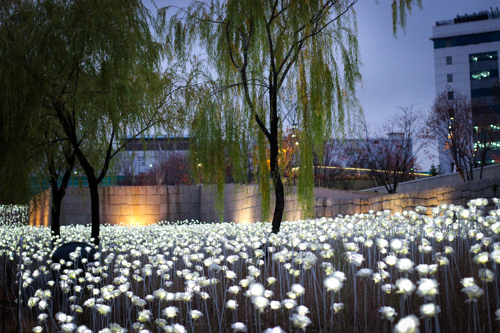 Dongdaemun LED Rose Garden