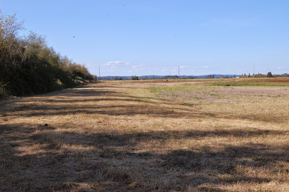 Proposed wetland area is mowed, sprayed and/or disked. This is from the NE corner of the wetland area.
