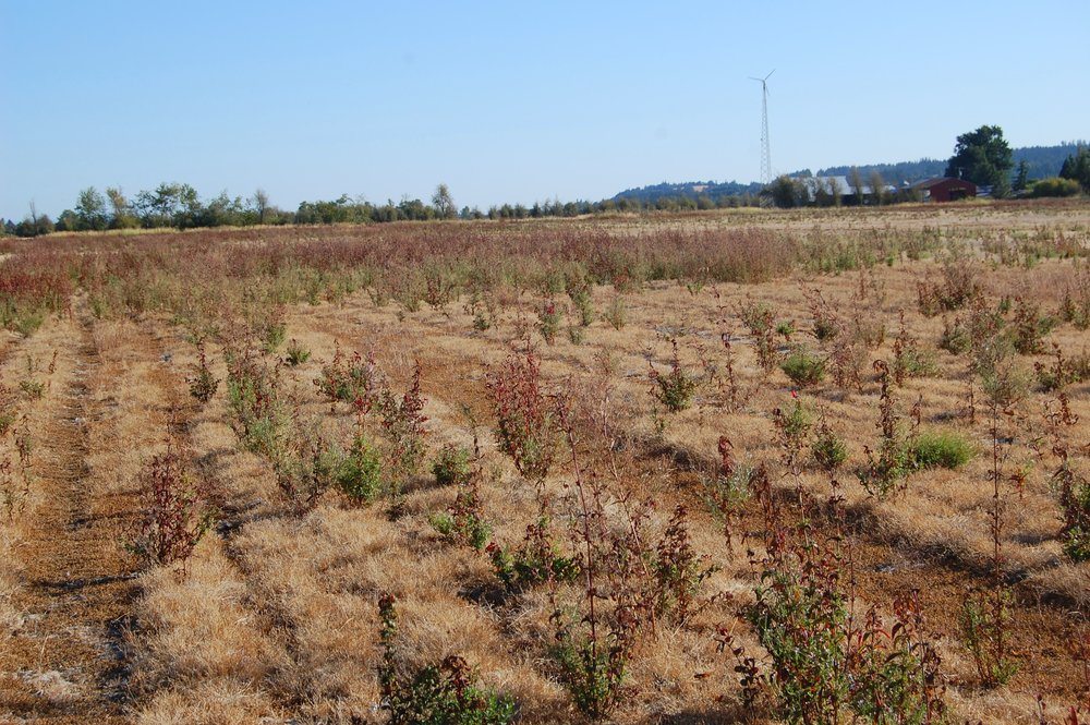NE corner field.   Non-native vegetation.