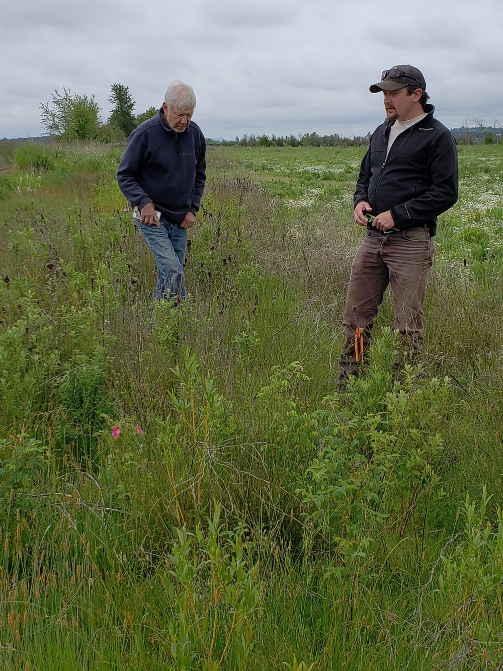 Ken and Cameron view the hedgerow planted on the east side of the property.  The hedgerow is an assortment of plants including  Spirea , willows and native wild roses.