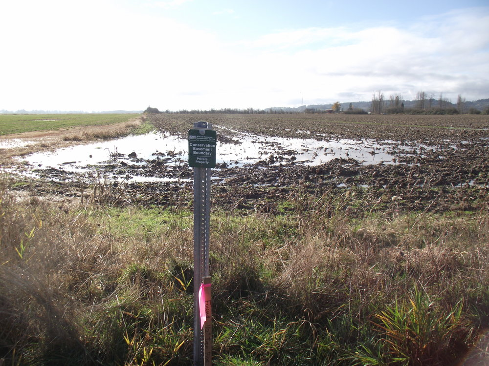 November of 2011.  Conservation Boundary Easement sign posted.  Behind is field where sweet corn was harvested.