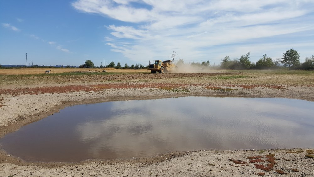 July, U.S. Fish & Wildlife Service grading around the turtle ponds.  Area around the ponds have been sprayed, awaiting planting of forbs and wetland species in 2018.