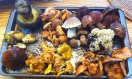 Mushroom heaven!