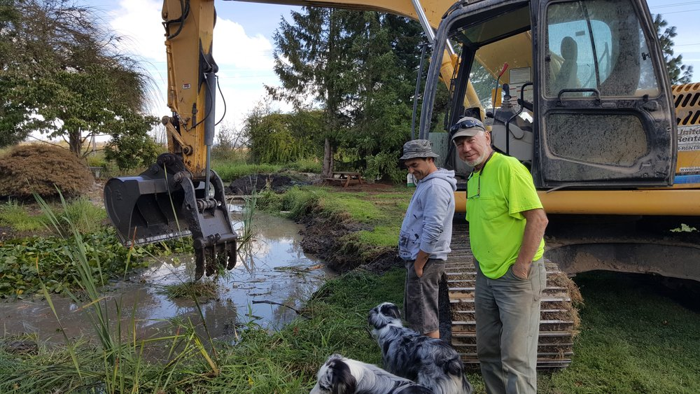Cleaning pond with excavator.