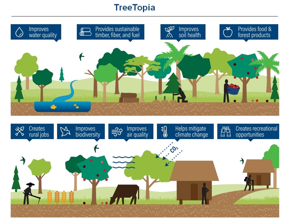 TreeTopia.jpg