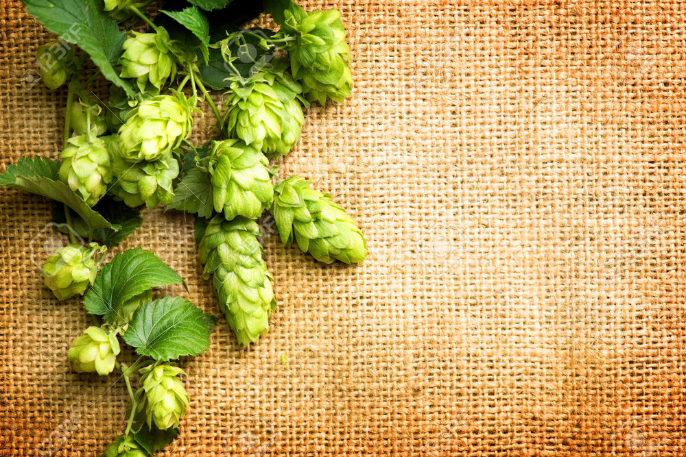 FRESH HOP WEEK Kickoff Party!  - We're kicking off an exciting week of Fresh Hops! Here to help? A bunch of breweries including Lowercase, Pike and more!  Try the beer, win prizes & chat up the breweries!