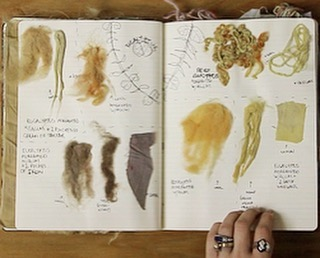 A page from the #dyebook / this spread documents #eucalyptus on locally sourced #wool + #cotton / #plantpigment #plantdye #naturaldyes #naturaldye #naturallydyed #textilelove #localcolor #farmtofabric #fashionrevolution #fiberart