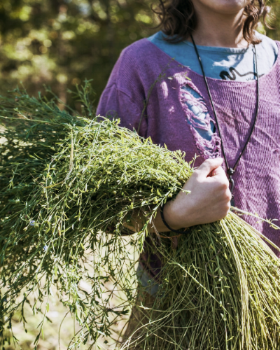 A shot by   VALERY RIZZO  , harvesting flax for linen at Maple Shade Farm in Katonah, NY.