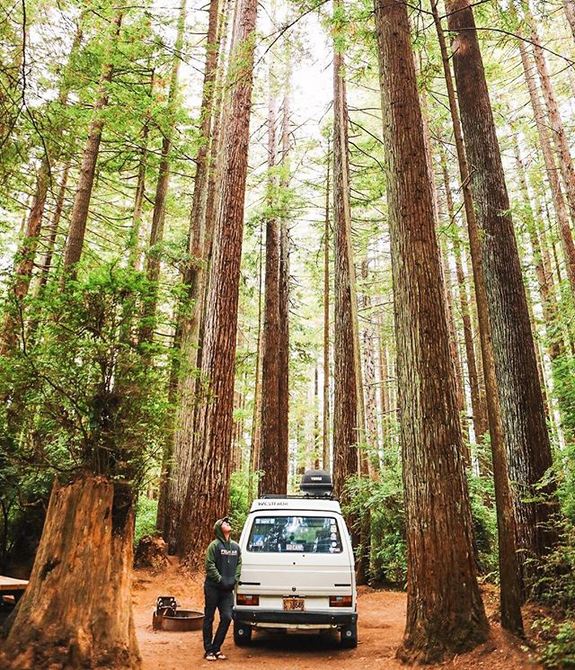 In a land of giants 🌲🏕 #gocamp #redwoods