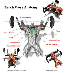 bench-press-diagram1.jpg