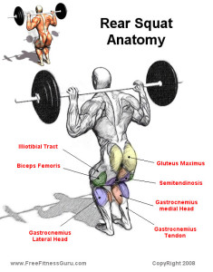 back-squat-muscles-diagram-235x3001.jpg