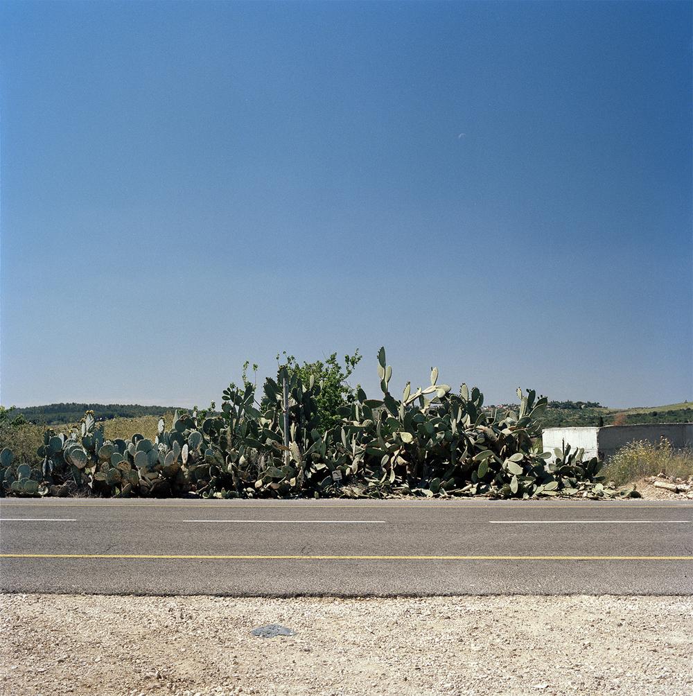 Cactus E5
